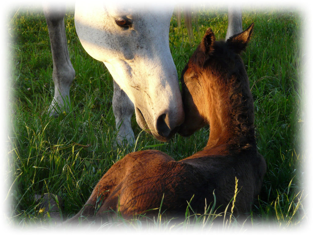 mare foal for home page white glow jpeg